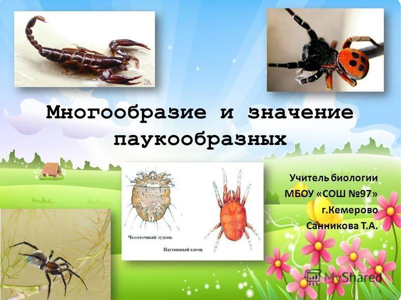 Многообразие и значение паукообразных Учитель биологии МБОУ «СОШ 97» г.Кемерово Санникова Т.А.