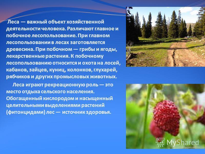 Леса важный объект хозяйственной деятельности человека. Различают главное и побочное лесопользование. При главном лесопользовании в лесах заготовляется древесина. При побочном грибы и ягоды, лекарственные растения. К побочному лесопользованию относит
