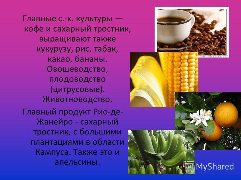 Главные с.-х. культуры кофе и сахарный тростник, выращивают также кукурузу, рис, табак, какао, бананы. Овощеводство, плодоводство (цитрусовые). Животноводство. Главный продукт Рио-де- Жанейро - сахарный тростник, с большими плантациями в области Камп