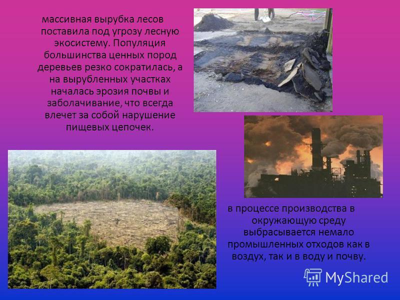 массивная вырубка лесов поставила под угрозу лесную экосистему. Популяция большинства ценных пород деревьев резко сократилась, а на вырубленных участках началась эрозия почвы и заболачивание, что всегда влечет за собой нарушение пищевых цепочек. в пр