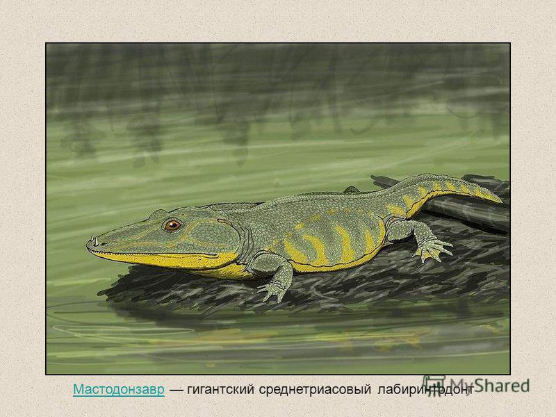 Мастодонзавр гигантский среднетриасовый лабиринтодонт Мастодонзавр