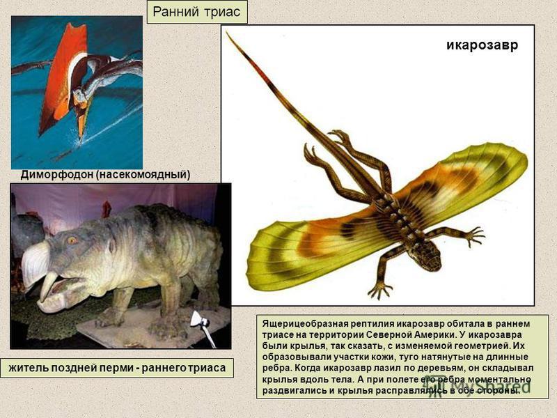 Ранний триас житель поздней перми - раннего триаса Ящерицеобразная рептилияикарозавр обитала в раннем триасе на территории Северной Америки. Уикарозавра были крылья, так сказать, с изменяемой геометрией. Их образовывали участки кожи, туго натянутые н