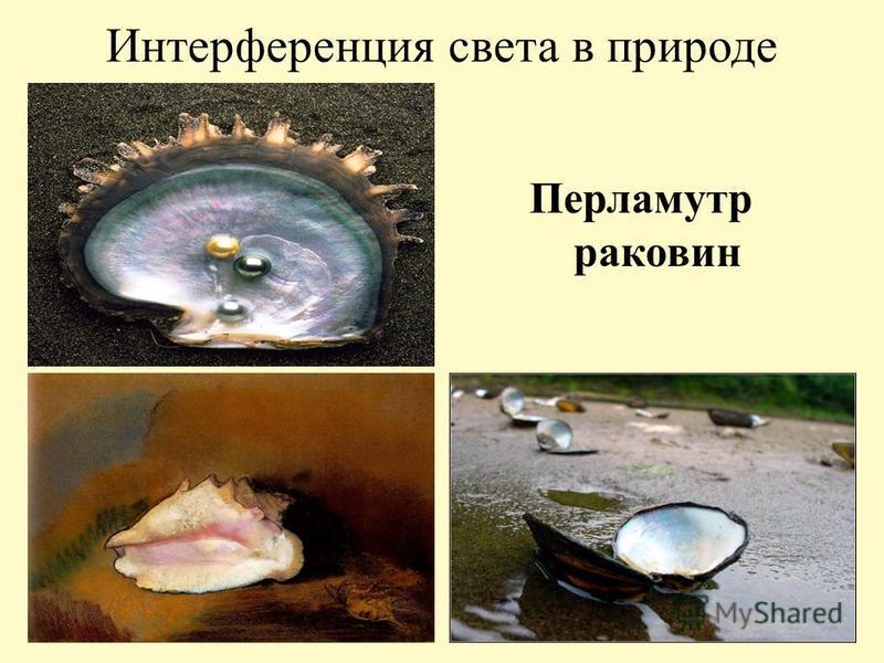 Интерференция света в природе Перламутр раковин