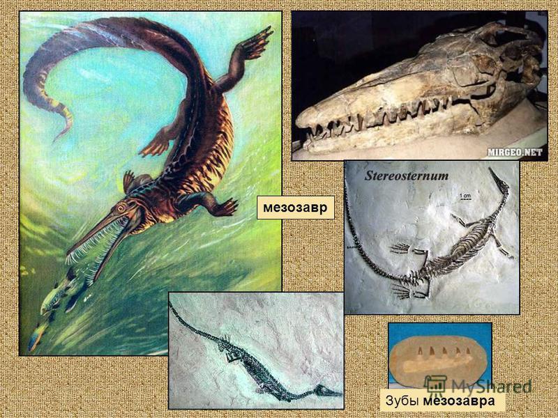 мезозавр Зубы мезозавра
