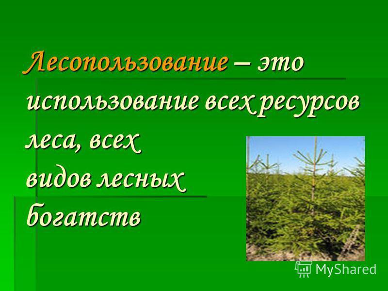 Лесопользование – это использование всех ресурсов леса, всех видов лесных богатств