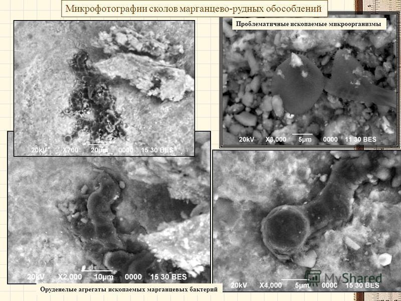 Микрофотографии сколов марганцево-рудных обособлений Проблематичные ископаемые микроорганизмы Оруденелые агрегаты ископаемых марганцевых бактерий
