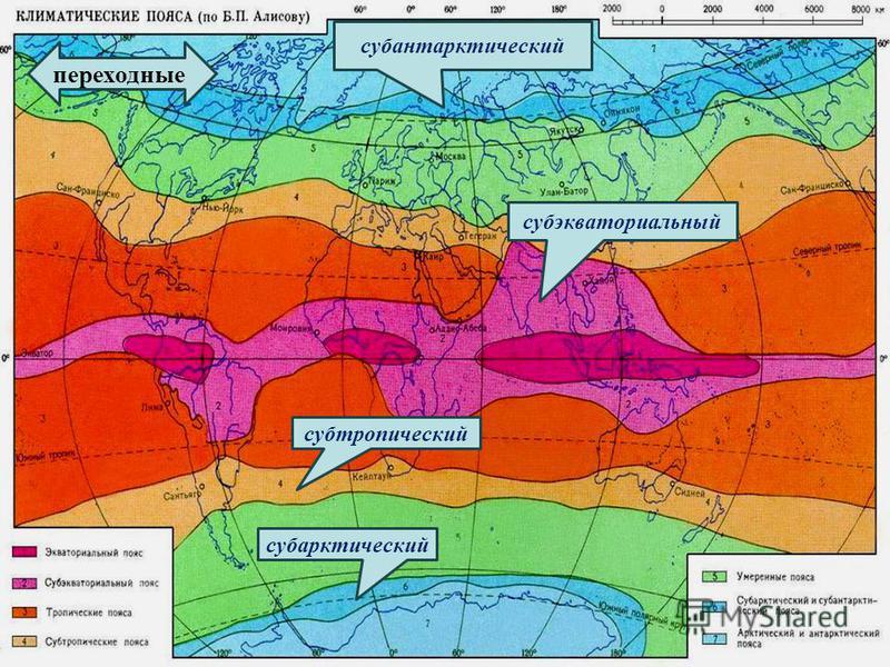 субтропический субэкваториальный субарктический переходные субантарктический