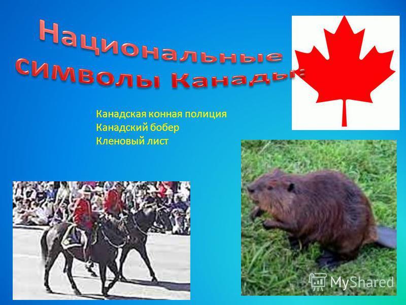 Канадская конная полиция Канадский побер Кленовый лист