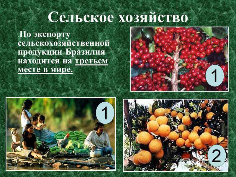 Сельское хозяйство. По экспорту сельскохозяйственной продукции Бразилия находится на третьем месте в мире. 1 1 2