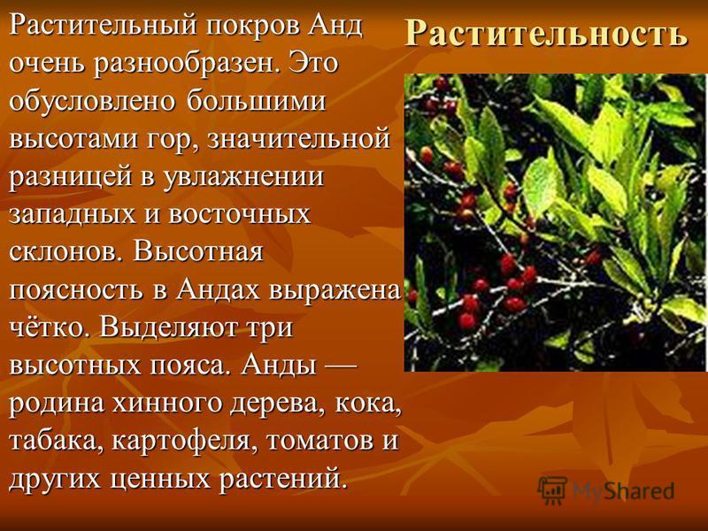 Растительность Растительный покров Анд очень разнообразен. Это обусловлено большими высотами гор, значительной разницей в увлажнении западных и восточных склонов. Высотная поясность в Андах выражена чётко. Выделяют три высотных пояса. Анды родина хин