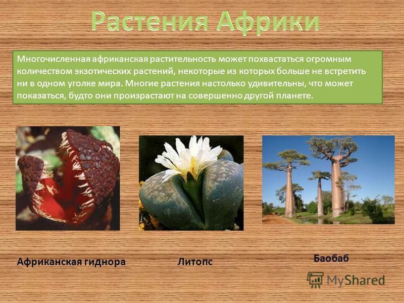 Многочисленная африканская растительность может похвастаться огромным количеством экзотических растений, некоторые из которых больше не встретить ни в одном уголке мира. Многие растения настолько удивительны, что может показаться, будто они произраст