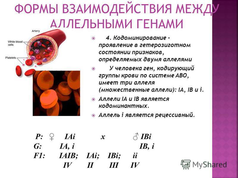 3. Сверхдоминирование - доминантный аллель в гетерозиготном состоянии имеет более выраженное проявление, чем в гомозиготном состоянии Например: доминантный ген, определяющий брахидактилию (короткие фаланги пальцев). Гомозиготные доминантные особи с г