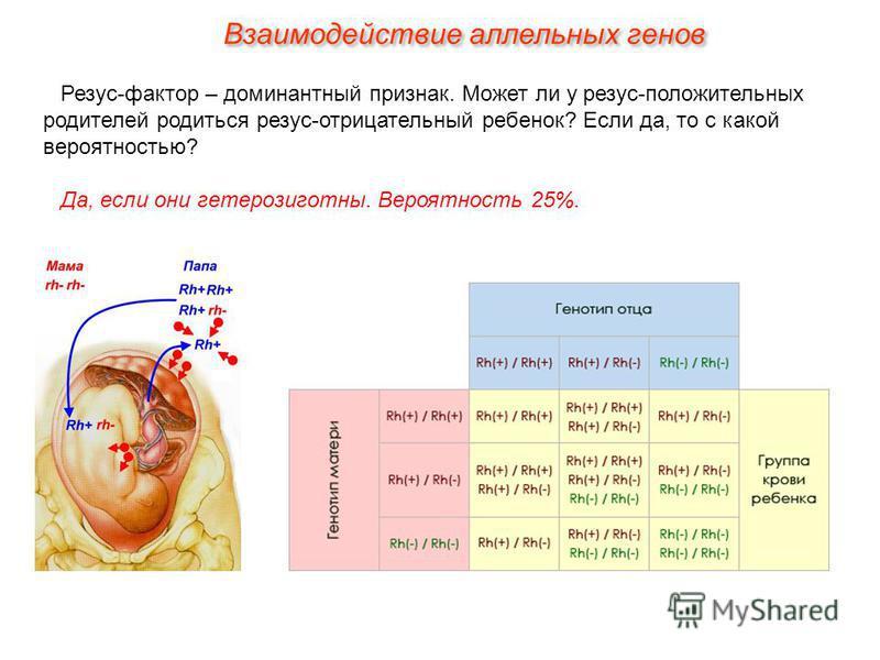 Резус-фактор – доминантный признак. Может ли у резус-положительных родителей родиться резус-отрицательный ребенок? Если да, то с какой вероятностью? Да, если они гетерозиготны. Вероятность 25%. Взаимодействие аллельных генов