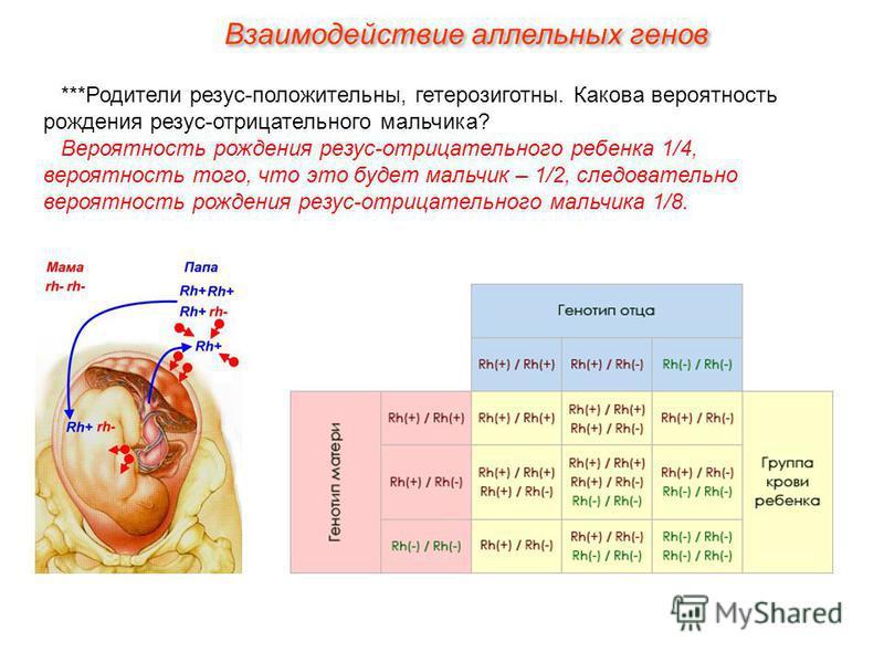 ***Родители резус-положительны, гетерозиготны. Какова вероятность рождения резус-отрицательного мальчика? Вероятность рождения резус-отрицательного ребенка 1/4, вероятность того, что это будет мальчик – 1/2, следовательно вероятность рождения резус-о