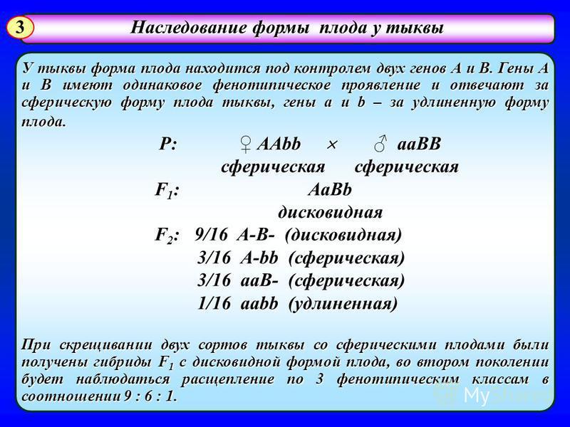 У тыквы форма плода находится под контролем двух генов А и В. Гены А и В имеют одинаковое фенотипическое проявление и отвечают за сферическую форму плода тыквы, гены a и b – за удлиненную форму плода. P: AAbb aaBB P: AAbb aaBB сферическая сферическая
