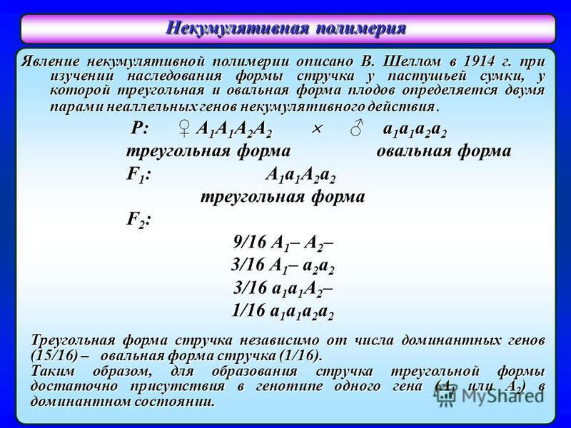Явление некумулятивной полимерии описано В. Шеллом в 1914 г. при изучении наследования формы стручка у пастушьей сумки, у которой треугольная и овальная форма плодов определяется двумя парами неаллельных генов некумулятивного действия Явление некумул