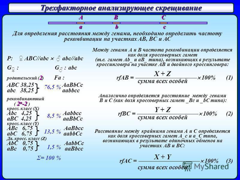Трехфакторное анализирующее скрещивание P: ABC//abc abc//abc abc G : G : abc родительский ( 2 ) Fa : ABC 38,25 AaBbCc abc 38,25 aabbcc рекомбинантный ( 2 n -2 ) кросс. класс (X) Abc 4,25 Aabbcc aBC 4,25 aaBbCc кросс. класс (Y) ABc 6,75 AaBbcc abC 6,7