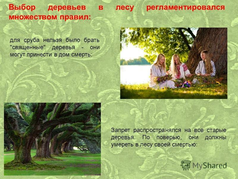 Выбор деревьев в лесу регламентировался множеством правил: для сруба нельзя было брать священные деревья - они могут принести в дом смерть: Запрет распространялся на все старые деревья. По поверью, они должны умереть в лесу своей смертью: