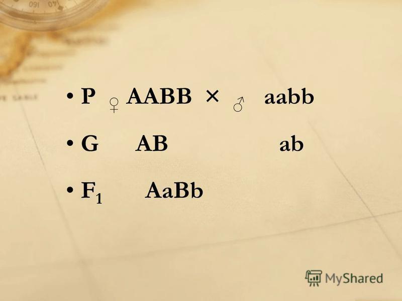 P AABB × aabb G AB ab F 1 AaBb