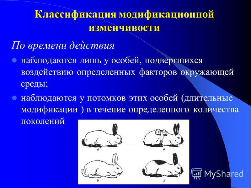 Классификация модификационной изменчивости По значению - приспособительные модификации - морфозы - изменения в фенотипе под действием экстремальных факторов окружающей среды (шрамы, травмы, ожоги) - фенокопии - изменения фенотипа под действием неблаг
