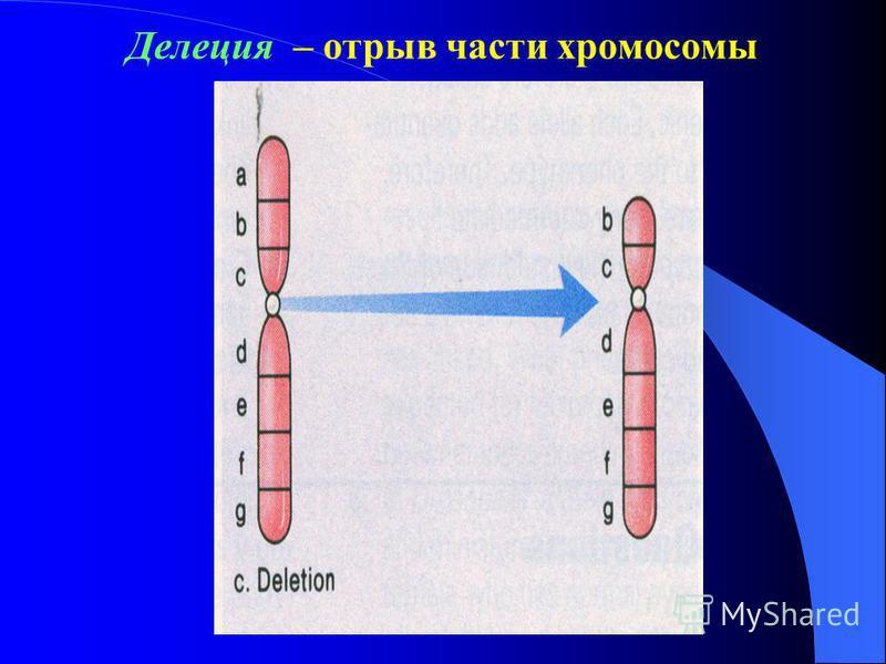 Хромосомные аберрации – изменение структуры хромосом, количество хромосом в кариотипе при этом не изменяется 1) Делеция 2) Дупликация 3) Инверсия 4) Транслокация