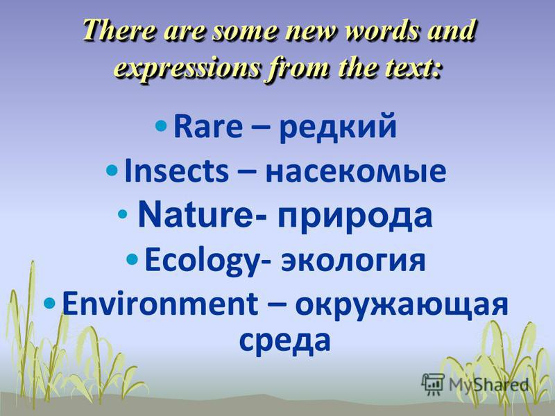 There are some new words and expressions from the text: Rare – редкий Insects – насекомые Nature- природа Ecology- экология Environment – окружающая среда