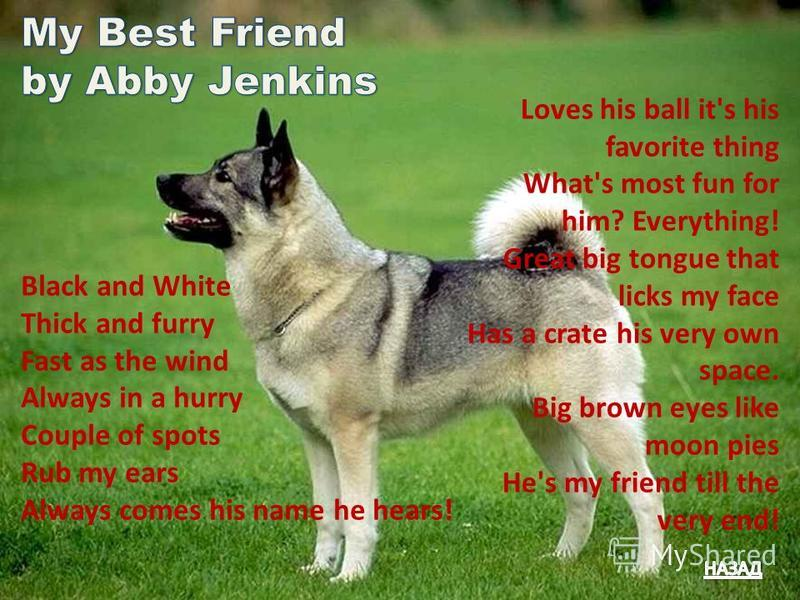 Loves his ball it's his favorite thing What's most fun for him? Everything! Great big tongue that licks my face Has a crate his very own space. Big brown eyes like moon pies He's my friend till the very end! Black and White Thick and furry Fast as th