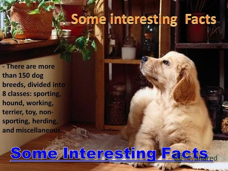 - There are more than 150 dog breeds, divided into 8 classes: sporting, hound, working, terrier, toy, non- sporting, herding, and miscellaneous.