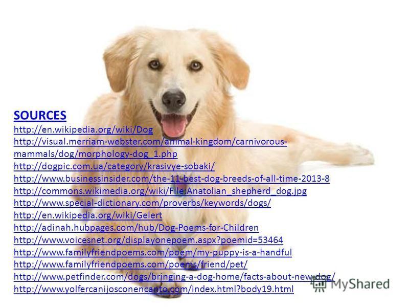 SOURCES http://en.wikipedia.org/wiki/Dog http://visual.merriam-webster.com/animal-kingdom/carnivorous- mammals/dog/morphology-dog_1.php http://dogpic.com.ua/category/krasivye-sobaki/ http://www.businessinsider.com/the-11-best-dog-breeds-of-all-time-2