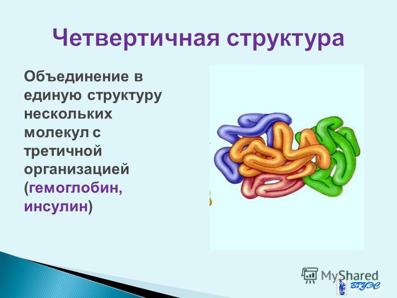 Объединение в единую структуру нескольких молекул с третичной организацией (гемоглобин, инсулин)