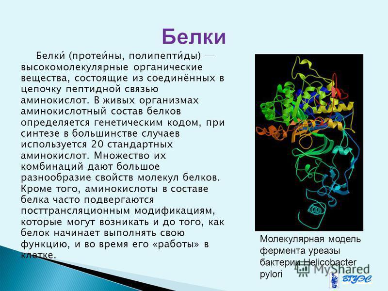 Белки́ (протеи́на, полипептид́ты) высокомолекулярнае органические вещества, состоящие из соединённах в цепочку пептидной связью аминокислот. В живых организмах аминокислотнай состав белков определяется генетическим кодом, при синтезе в большинстве сл