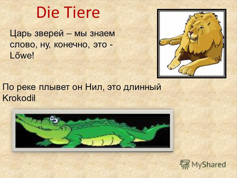 Die Tiere Царь зверей – мы знаем слово, ну, конечно, это - Lőwe! По реке плывет он Нил, это длинный Krokodil.