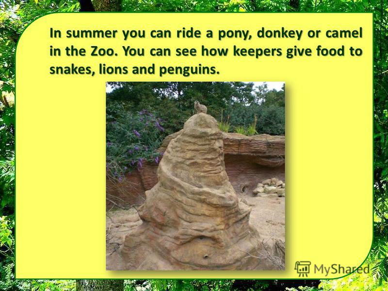 In summer you can ride a pony, donkey or camel in the Zoo. You can see how keepers give food to snakes, lions and penguins.