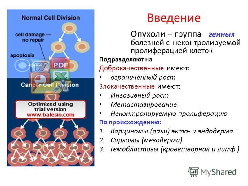Введение Опухоли – группа генных болезней с неконтролируемой пролиферацией клеток Подразделяют на Доброкачественные имеют: ограниченный рост Злокачественные имеют: Инвазивный рост Метастазирование Неконтролируемую пролиферацию По происхождению: 1. Ка