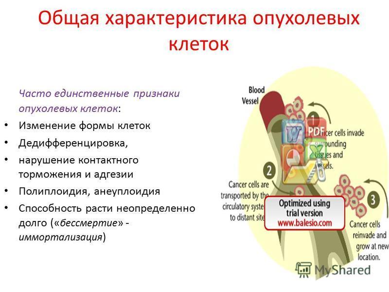 Общая характеристика опухолевых клеток Часто единственные признаки опухолевых клеток: Изменение формы клеток Дедифференцировка, нарушение контактного торможения и адгезии Полиплоидия, анеуплоидия Способность расти неопределенно долго (« бессмертие »