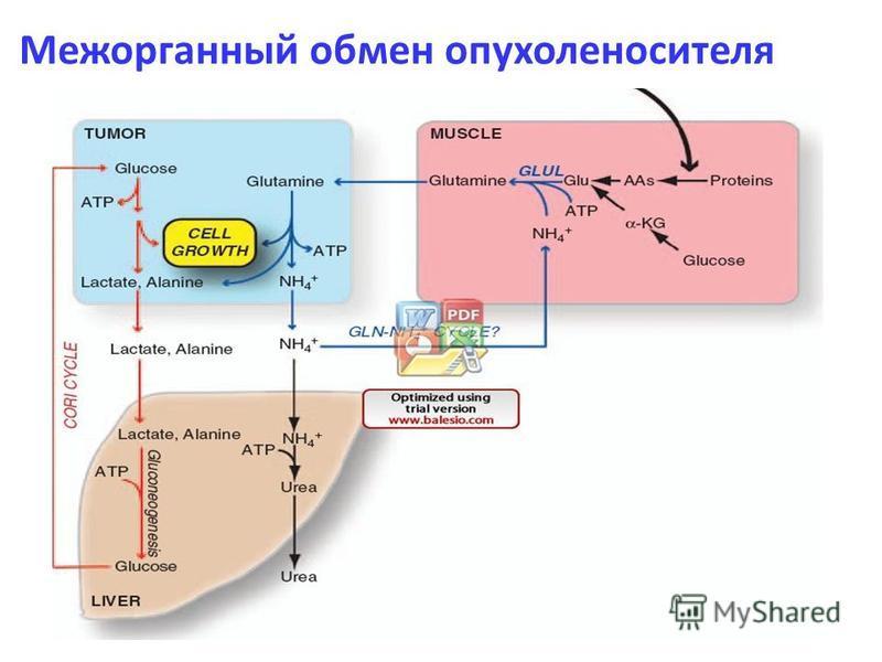 Межорганный обмен опухоленосителя