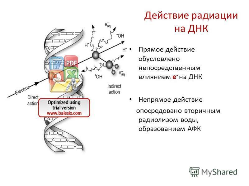 Действие радиации на ДНК Прямое действие обусловлено непосредственным влиянием е - на ДНК Непрямое действие опосредовано вторичным радиолизом воды, образованием АФК