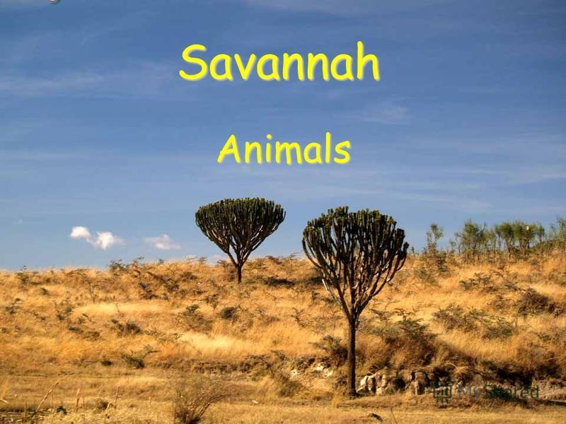 Savannah Animals