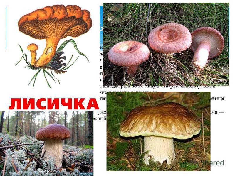 К условно-съедобным грибам чаще всего относят грибы, ядовитые или едкого вкуса в сыром виде, но вполне съедобные после тщательной кулинарной обработки. Иногда называются и другие причины условной съедобности например, съедобны только в молодом возрас