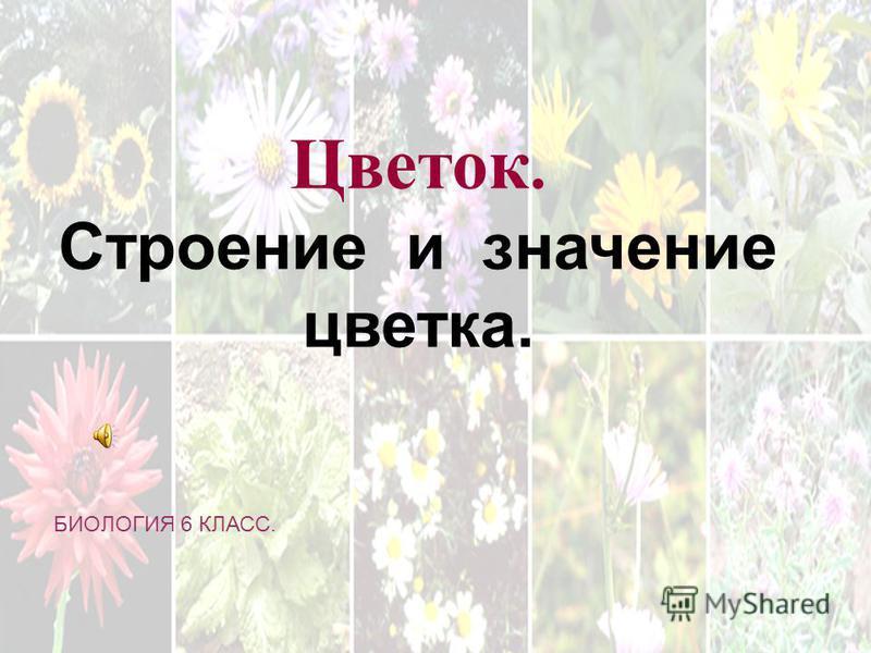 . Цветок. Строение и значение цветка. БИОЛОГИЯ 6 КЛАСС.