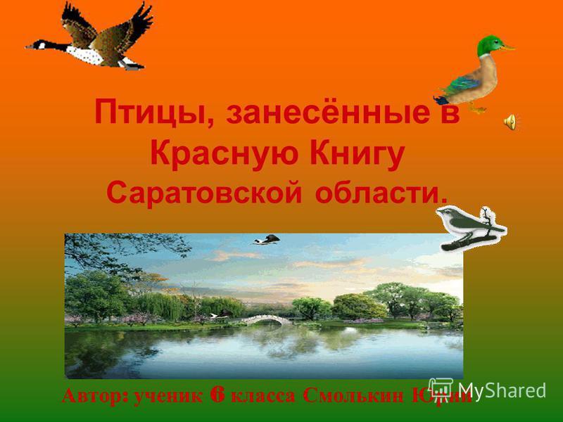 Птицы, занесённые в Красную Книгу Саратовской области. Автор : ученик 6 класса Смолькин Юрий