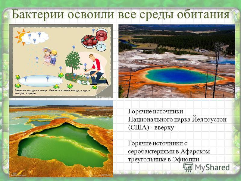 Бактерии освоили все среды обитания Горячие источники Национального парка Йеллоустон (США) - вверху Горячие источники с серобактериями в Афарском треугольнике в Эфиопии