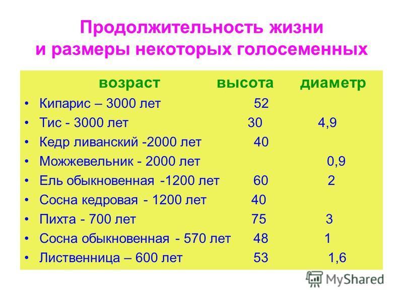 Продолжительность жизни и размеры некоторых голосеменных возраст высота диаметр Кипарис – 3000 лет 52 Тис - 3000 лет 30 4,9 Кедр ливанский -2000 лет 40 Можжевельник - 2000 лет 0,9 Ель обыкновенная -1200 лет 60 2 Сосна кедровая - 1200 лет 40 Пихта - 7