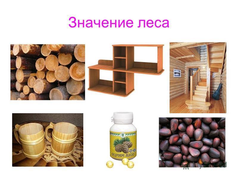 Значение леса
