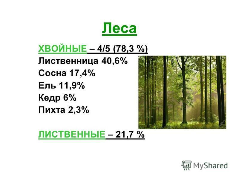 Леса ХВОЙНЫЕ – 4/5 (78,3 %) Лиственница 40,6% Сосна 17,4% Ель 11,9% Кедр 6% Пихта 2,3% ЛИСТВЕННЫЕ – 21,7 %
