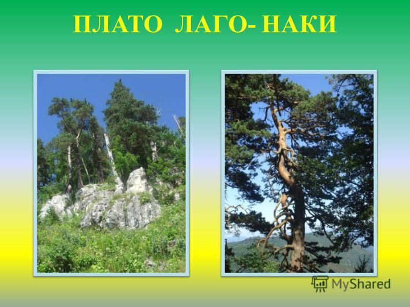 ПЛАТО ЛАГО- НАКИ
