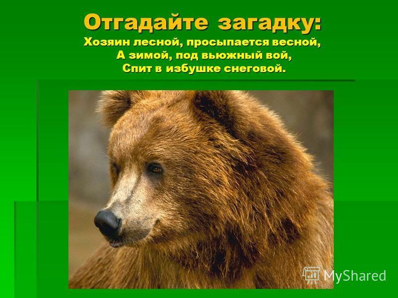 Отгадайте загадку: Хозяин лесной, просыпается весной, А зимой, под вьюжный вой, Спит в избушке снеговой.