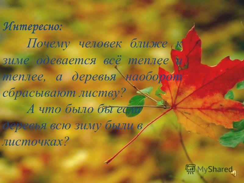 Интересно: Почему человек ближе к зиме одевается всё теплее и теплее, а деревья наоборот сбрасывают листву? А что было бы если деревья всю зиму были в листочках?