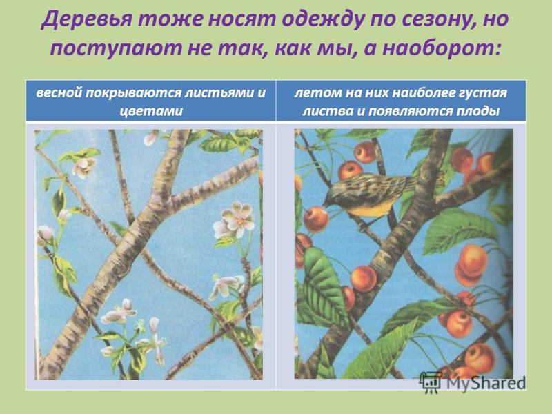 Деревья тоже носят одежду по сезону, но поступают не так, как мы, а наоборот: весной покрываются листьями и цветами летом на них наиболее густая листва и появляются плоды