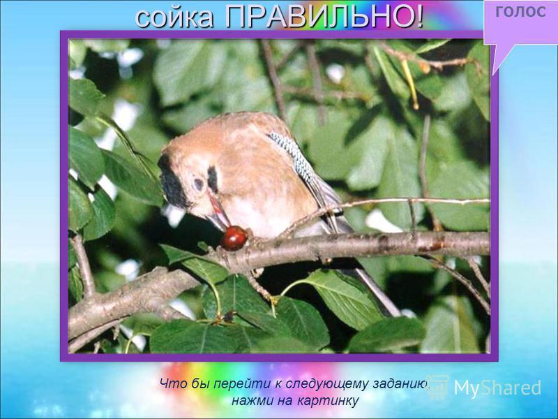 Повторить голос Нажми на птичку, которая сейчас пропела